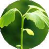 plant01b